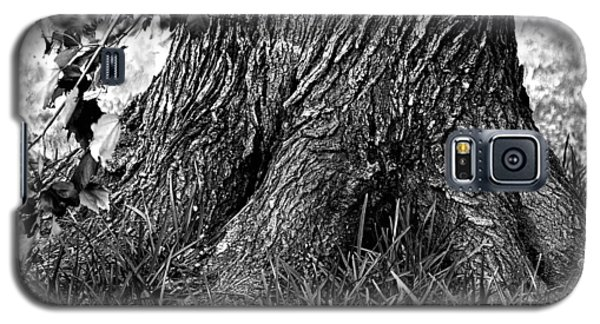 Galaxy S5 Case featuring the photograph Maple by Dan Wells