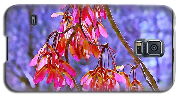 Galaxy S5 Case featuring the photograph Maple Keys by Judi Bagwell