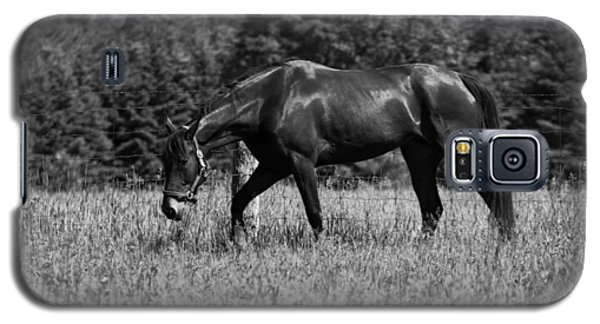 Galaxy S5 Case featuring the photograph Mare In Field by Davandra Cribbie