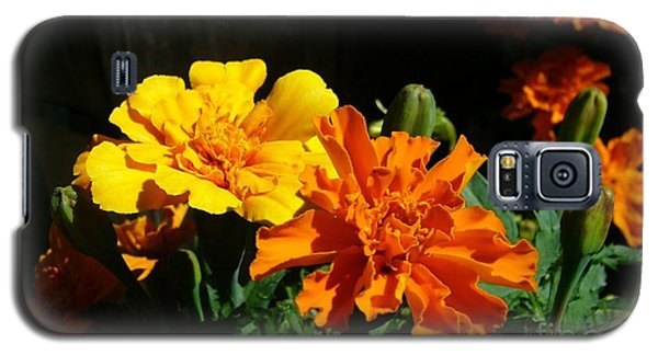 Galaxy S5 Case featuring the photograph Marigold Morning Glory by Jim Sauchyn