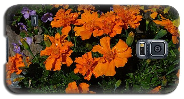 Galaxy S5 Case featuring the photograph Marigolds by Jim Sauchyn