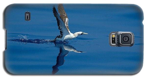 Masked Booby Galaxy S5 Case