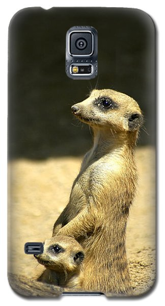 Meerkat Mother And Baby Galaxy S5 Case