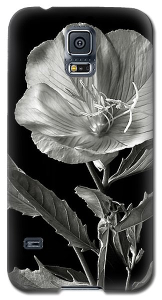 Galaxy S5 Case featuring the photograph Mexican Evening Primrose In Black And White by Endre Balogh