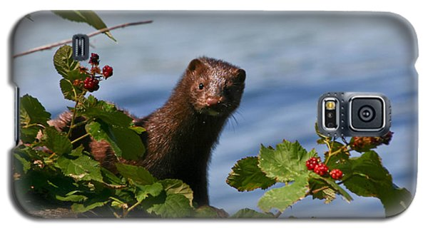 Galaxy S5 Case featuring the photograph Mink In Blackberries. by Mitch Shindelbower