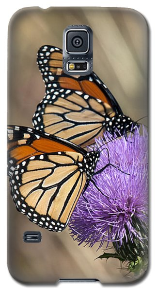 Galaxy S5 Case featuring the photograph Monarch Butterflies On Field Thistle Din162 by Gerry Gantt