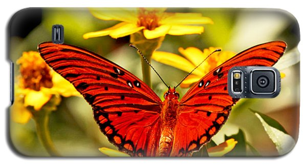 Galaxy S5 Case featuring the photograph Monarch Butterfly  by Luana K Perez