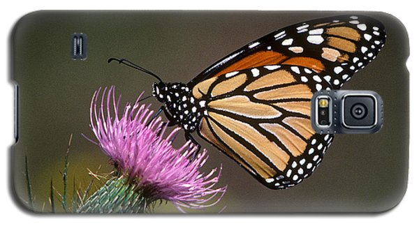 Galaxy S5 Case featuring the photograph Monarch Butterfly On Thistle 13a by Gerry Gantt