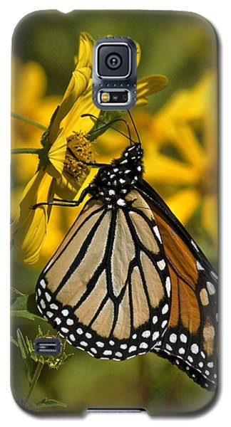 Galaxy S5 Case featuring the photograph Monarch Butterfly On Tickseed Sunflower Din146 by Gerry Gantt