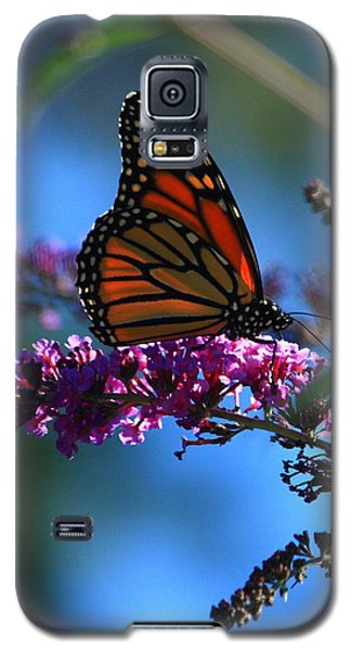 Monarch Butterfly Galaxy S5 Case by Patrick Witz