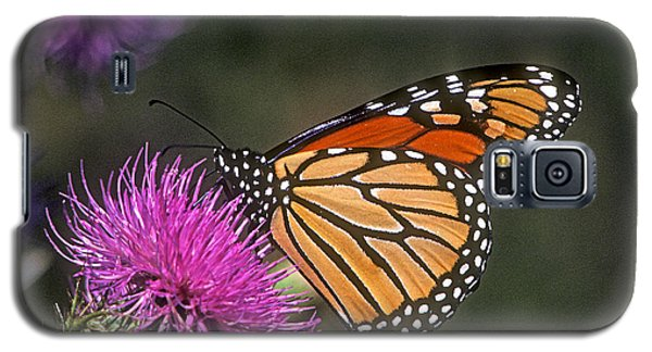 Galaxy S5 Case featuring the photograph Monarch On Thistle 13f by Gerry Gantt