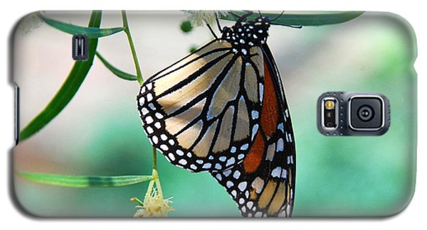 Galaxy S5 Case featuring the photograph Monarch by Tam Ryan