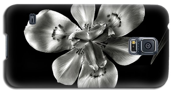Morea Lily In Black And White Galaxy S5 Case