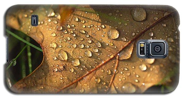 Morning Dew On Oak Leaf Galaxy S5 Case