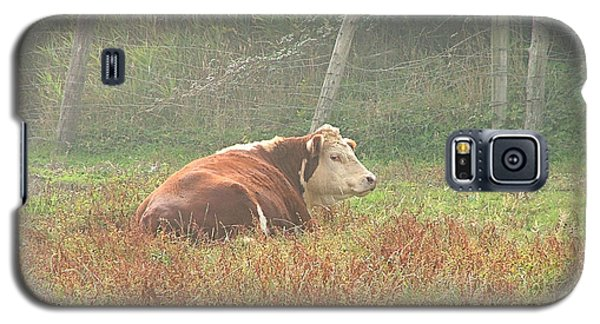Galaxy S5 Case featuring the photograph Morning Moo by Wendy McKennon