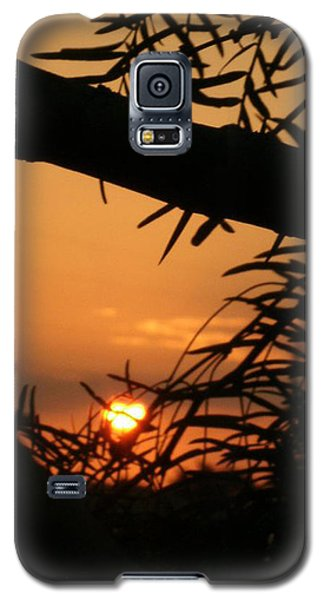 Galaxy S5 Case featuring the photograph Morning Sun And Mesquite by Louis Nugent