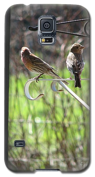 Morning Visitors Galaxy S5 Case by Rory Sagner