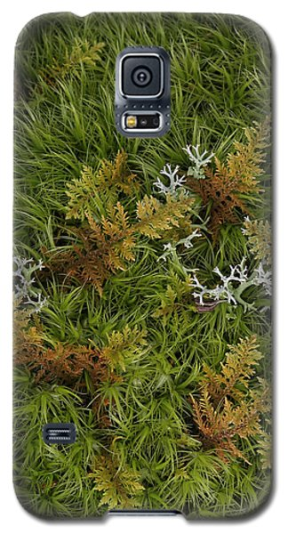 Moss And Lichen Galaxy S5 Case by Daniel Reed