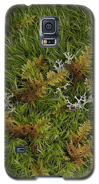 Moss And Lichen Galaxy S5 Case