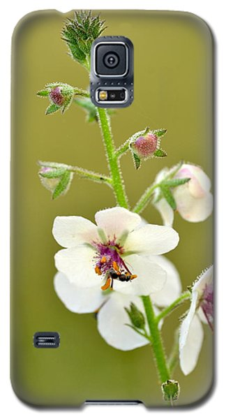 Galaxy S5 Case featuring the photograph Moth Mullein by JD Grimes