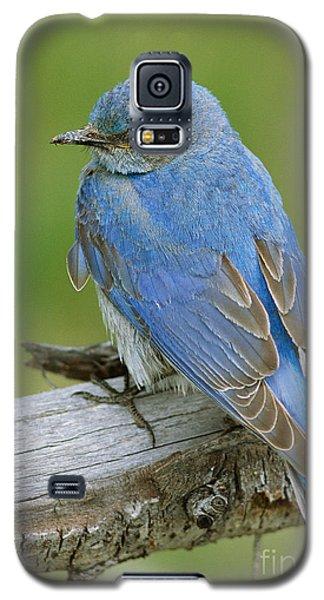 Mountain Bluebird Galaxy S5 Case by Doug Herr
