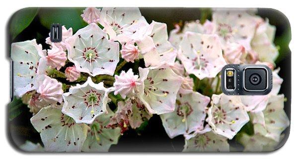 Mountain Laurel Flowers Galaxy S5 Case
