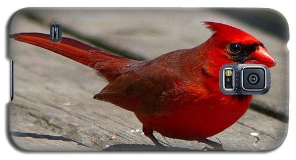 Mr. Cardinal Galaxy S5 Case