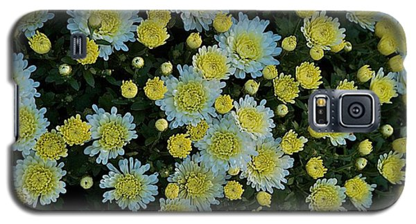 Galaxy S5 Case featuring the photograph Mums by Joseph Yarbrough