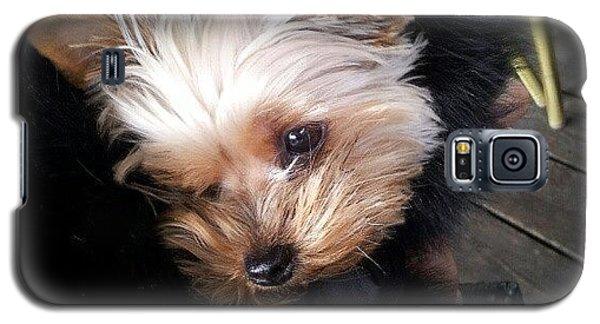 My #princess #dog #yorkie Galaxy S5 Case