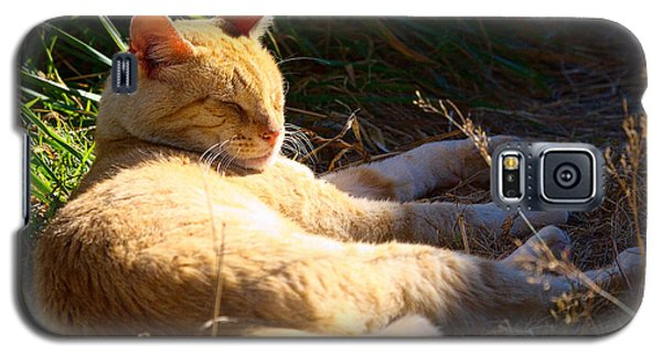 Galaxy S5 Case featuring the photograph Napping Orange Cat by Chriss Pagani