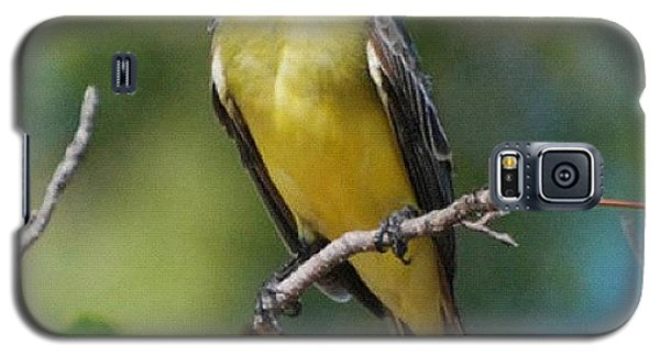 Cause Galaxy S5 Case - #nature #mexico #bird #tree #branch # by Michael Lynch