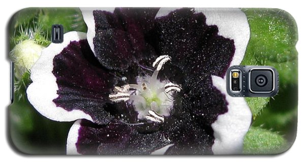 Galaxy S5 Case featuring the photograph Nemophilia Named Penny Black by J McCombie