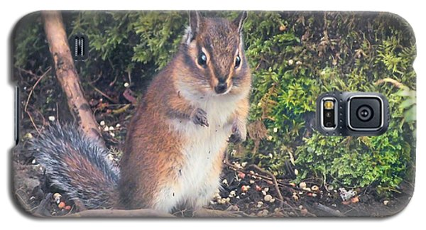 Galaxy S5 Case featuring the photograph Newport Squirrel by Wendy McKennon