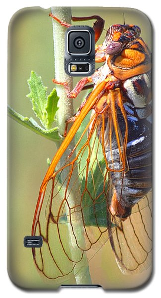 Noisy Cicada Galaxy S5 Case