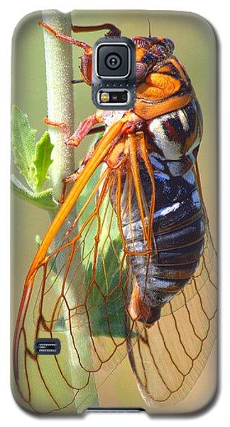 Noisy Cicada Galaxy S5 Case