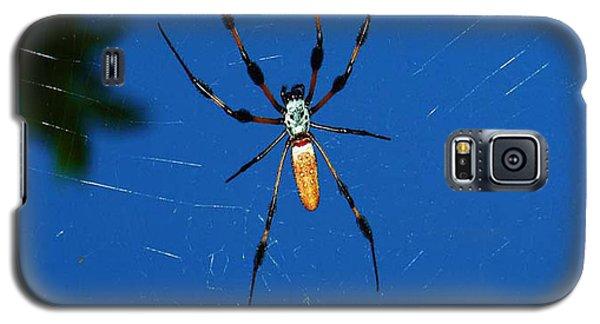 Not-so Itsy-bitsy Spider Galaxy S5 Case