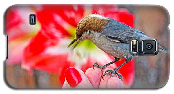 Galaxy S5 Case featuring the photograph Nuthatch Bird Friend by Luana K Perez