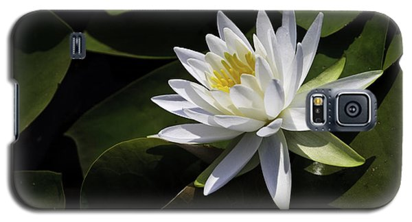 Nymphaea Marliacea 'albida' Galaxy S5 Case by Perla Copernik