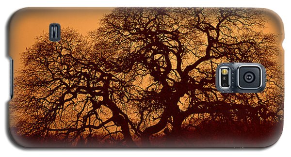 Galaxy S5 Case featuring the photograph Oak Tree At Sunset by Rima Biswas