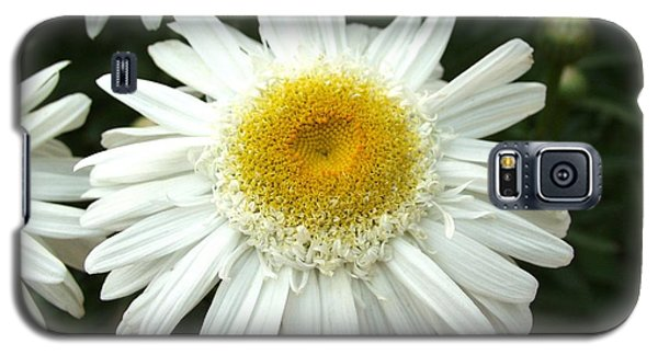 Galaxy S5 Case featuring the photograph Oh Daisy by Carol Sweetwood