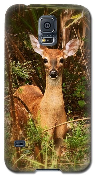 Oh Deer Galaxy S5 Case