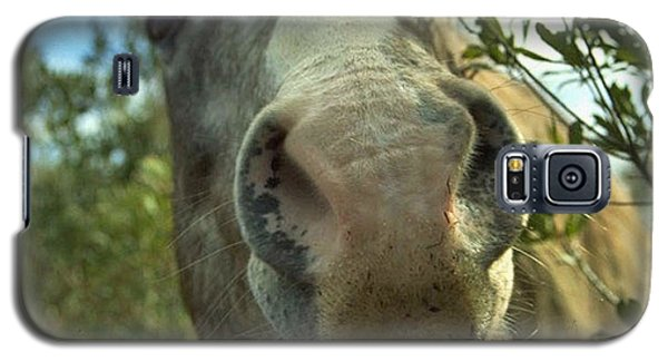 Galaxy S5 Case featuring the photograph Old Gray Mare by Patricia Greer