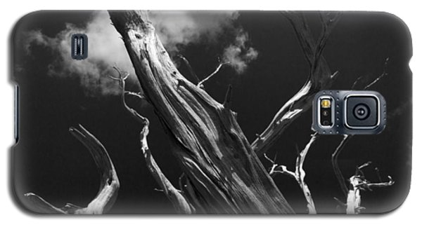 Galaxy S5 Case featuring the photograph Old Tree by David Gleeson