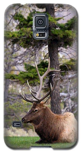 On The Grass Galaxy S5 Case by Steve McKinzie