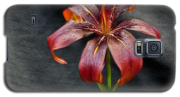One Black Lily Galaxy S5 Case