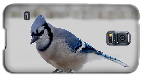 Galaxy S5 Case featuring the photograph Blue Jay by Maciek Froncisz
