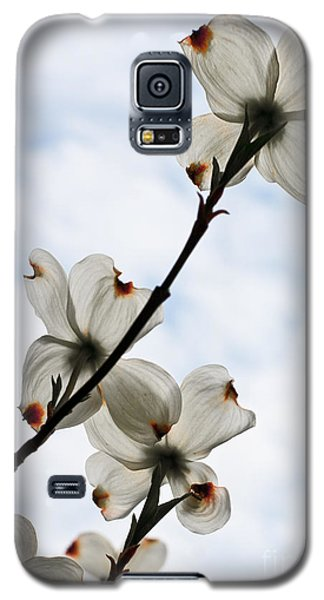 Galaxy S5 Case featuring the photograph Only Once A Year by Barbara McMahon