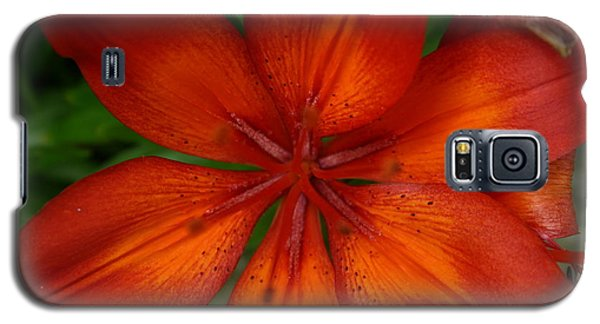 Orange Beauty Galaxy S5 Case by Dolores  Deal