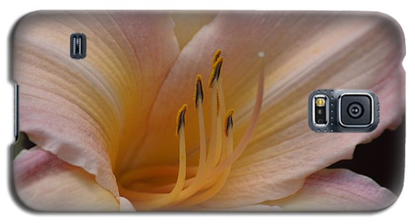 Galaxy S5 Case featuring the photograph Orange Daylily  by Tannis  Baldwin