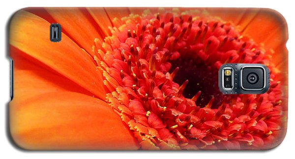 Orange Gerbera Close Up Galaxy S5 Case by Ken Brannen